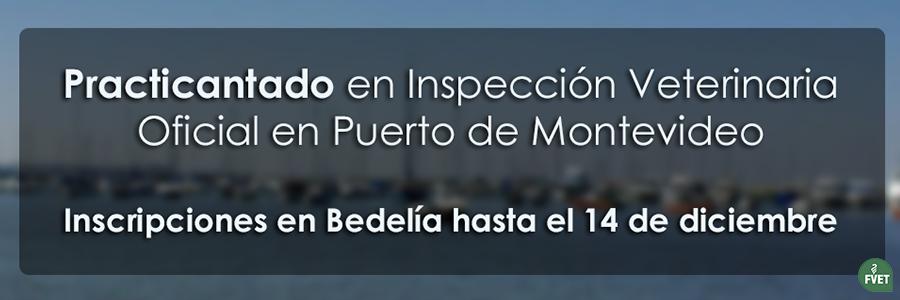 Practicantado en Servicios de Inspección Veterinaria Oficial en Puerto de Montevideo