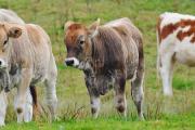 """Curso de posgrado: """"Seminario I Para estudiantes de Maestrías en Producción Animal, Reproducción Animal y Nutrición de Rumiantes"""""""