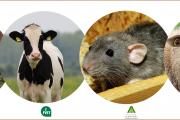 """Curso: """"Manejo y uso de animales en experimentación, docencia e investigación universitaria"""""""