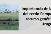 """Jornada: """"Importancia de la conservación del cerdo Pampa Rocha como recurso genético criollo de Uruguay"""""""