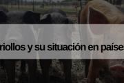 """Ciclo de Webinars: """"Los cerdos criollos y su situación en países de América"""""""