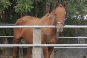 """Curso: """"Manejo y comportamiento del equino según disciplina"""""""