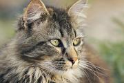 """Curso de Posgrado: """"Enfermedades infecciosas virales de importancia en la clínica felina"""""""