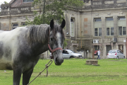 """Curso: """"Los equinos en el Uruguay"""""""