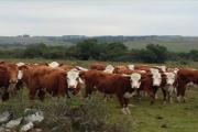 """Charla: """"Inmunidad, diagnóstico y vacunación en bovinos"""""""